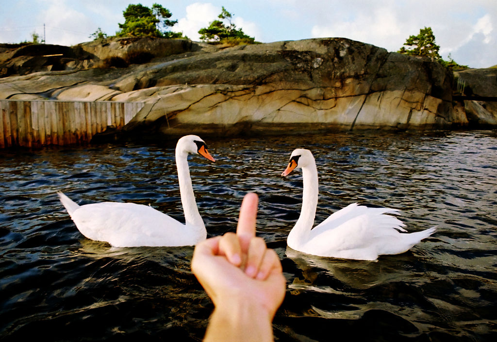 Swans Are Evil