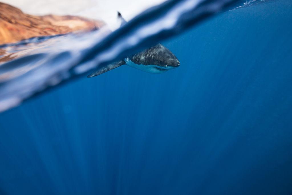 Corey-Arnold-Sharks-3.jpg
