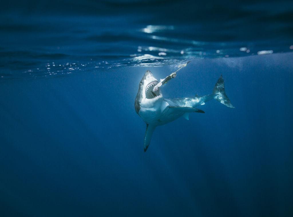 Corey-Arnold-Sharks-6.jpg