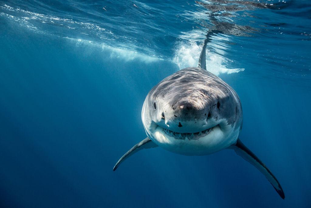 Corey-Arnold-Sharks-13.jpg