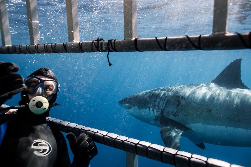 Corey-Arnold-Sharks-14.jpg