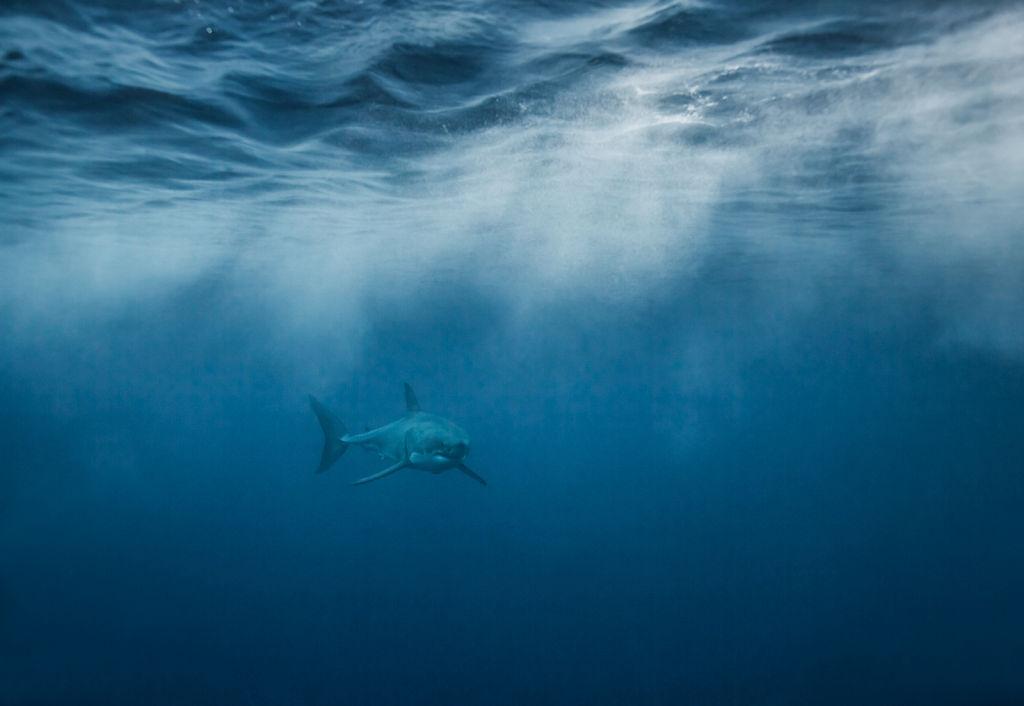 Corey-Arnold-Sharks-15.jpg