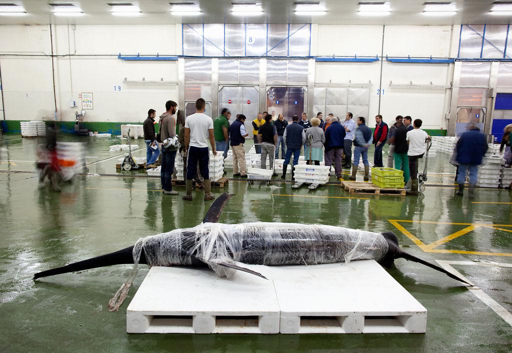 Untitled, Vigo Fish Market